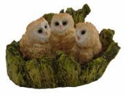 3 Barn Owlets