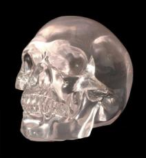 Clear Skull by Design Clinic