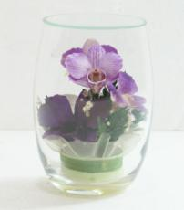 Five Orchids in a Rugby Glass
