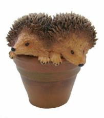 Hedgehogs in Flowerpot