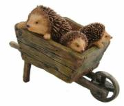 Hedgehogs in Wheelbarrow