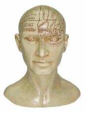 Phrenology Head by Tina Tarrant