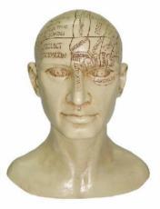 Phrenology Head by Tina Tarrant