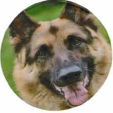 Set of 4 Alsation Dog Decal Coasters