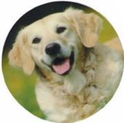 Set of 4 Retriever Dog Decal Coasters