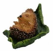 Sleepy Hedgehog on Leaf